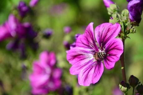Bestäubung von verschiedenen Blumen